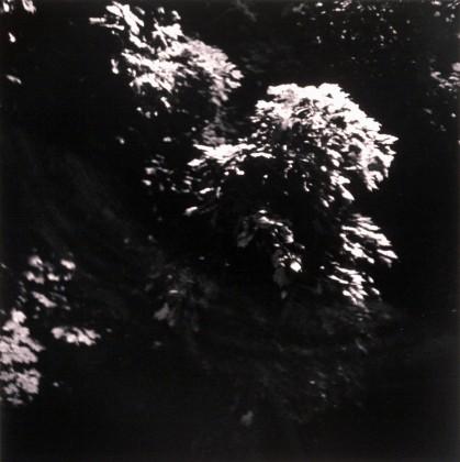 Streetlit tree